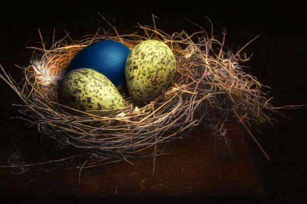 POpen-GOLD-A-130-GOLD Nest and eggs