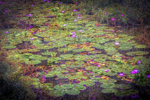 Set-A-391-Claude Monet Water Lilies