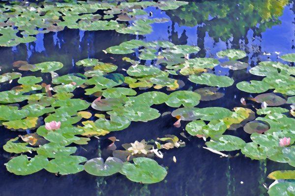 Set-B-473-Monet, water lilies at Giverny