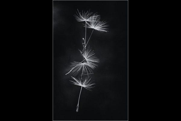 32_Wind Blown_357
