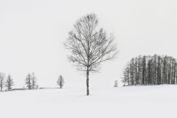7_Hokkaido Winter Scape_328