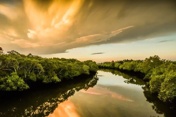 Open-A-487-Boondall Wetland