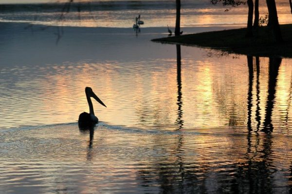 Open-B-485-Peaceful backwater
