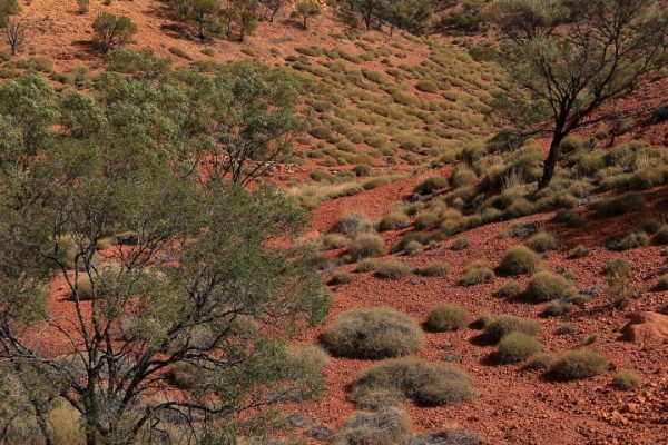 Open-GOLD-A-87-Red Dirt Country